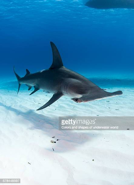 watch out - south bimini stock photos and pictures