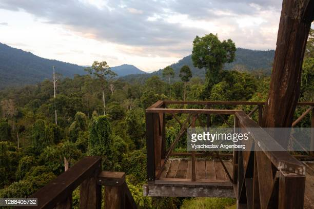 watch tower in maliau basin, tropical rainforest after sunset, borneo, malaysia - argenberg stock pictures, royalty-free photos & images