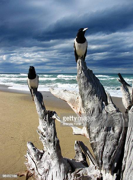 watching and waiting - coffs harbour stock pictures, royalty-free photos & images