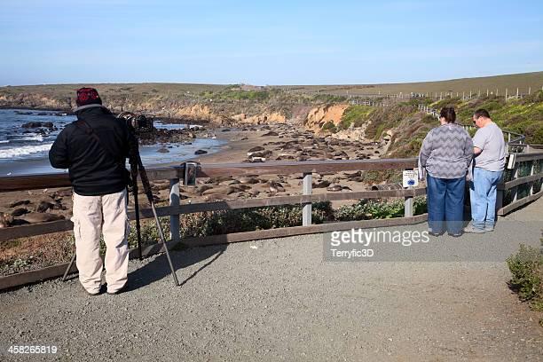 watching elephant seals in february - terryfic3d stockfoto's en -beelden