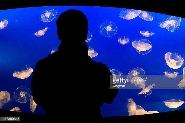 watching jelly fish - phosphorescence stock pictures, royalty-free photos & images