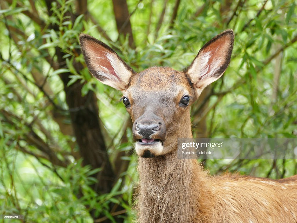 Watching me with open mouth : Stock Photo