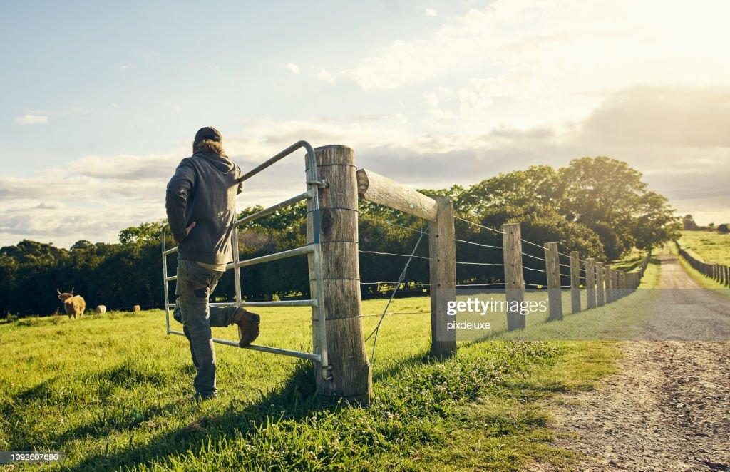 Watching over his herd : Stock Photo