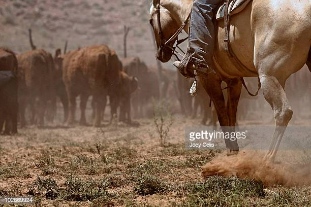 watching the cattle - cowboy stock pictures, royalty-free photos & images