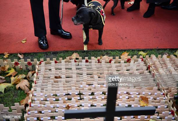 Watchman V the retiring mascot for the Staffordshire Regiment Association stands near to the Field of Remembrance at Westminster Abbey in central...