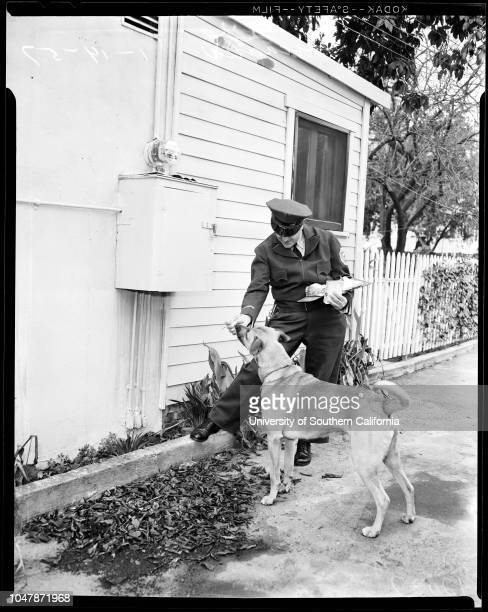 Water and power meter reader feeds dog candy, 14 January 1957. Vincent Buscaglia;Dog 'Bruno'.;Caption slip reads: 'Photographer: Lapp. Date: ....