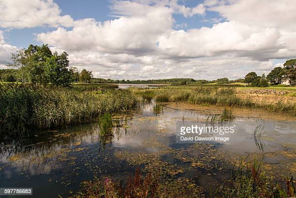 Water and sky reflection with grass, trees, cloud