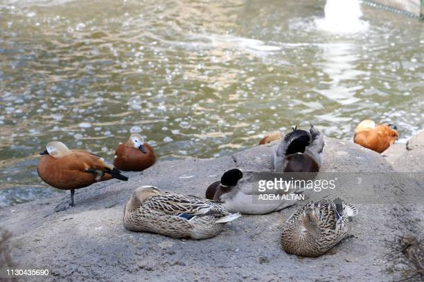 Water birds stand their enclosure at the Kecioren Municipality Pet Park in Ankara on March 14 2019