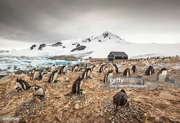 water boat colony - houses in antarctica stock pictures, royalty-free photos & images