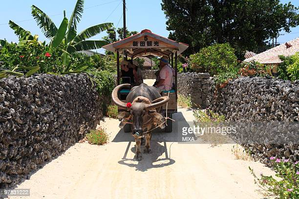 Water Buffalo Carriage, Taketomi, Okinawa, Japan