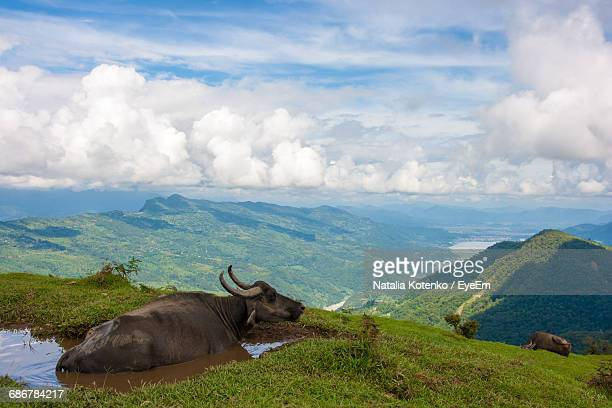 Water Buffalo Resting In Pond On Mountain By Landscape Against Cloudy Sky