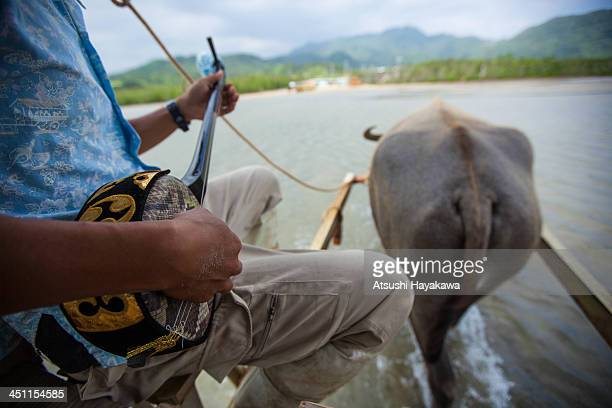 Water buffalo vehicle