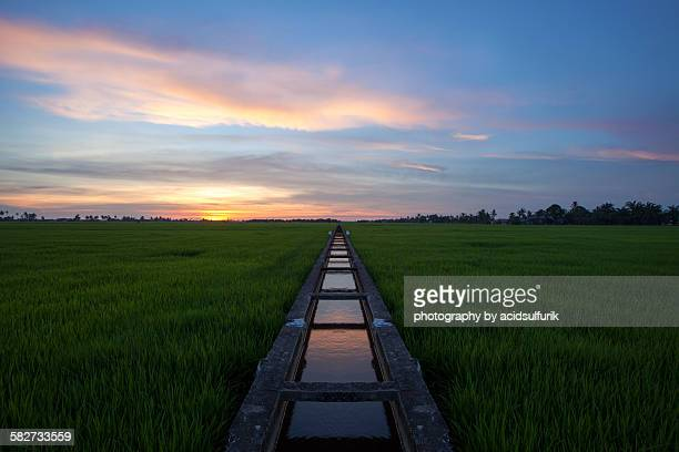 water canal for paddy field in sabak bernam - 運河 ストックフォトと画像