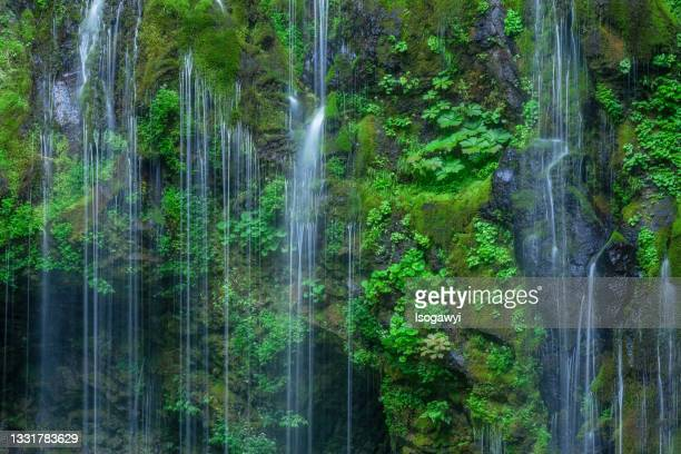 water cascading down a mossy cliff face - isogawyi stock pictures, royalty-free photos & images