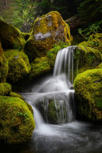 Water cascading over mossy boulders in Black Creek, Waldo-Diamond Wilderness, Oregon.