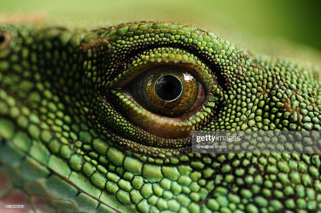Water Dragons Eye : Stockfoto