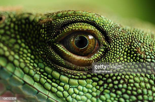 water dragons eye - animal eye stock pictures, royalty-free photos & images