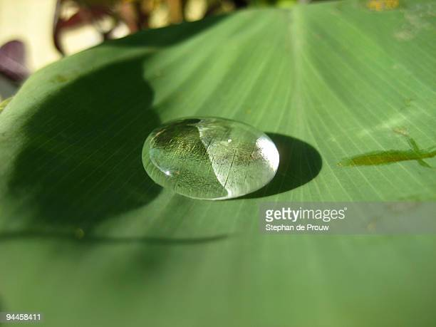 water drop in the morning light - stephan de prouw stock pictures, royalty-free photos & images