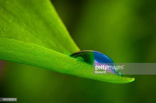 Gota de agua sobre una fresca de hoja verde