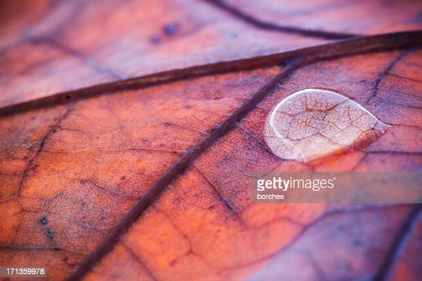 Water Drop On Autumn Leaf