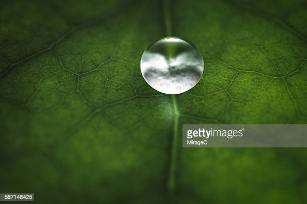 water drop on leaf macro - vascular bundle stock photos and pictures