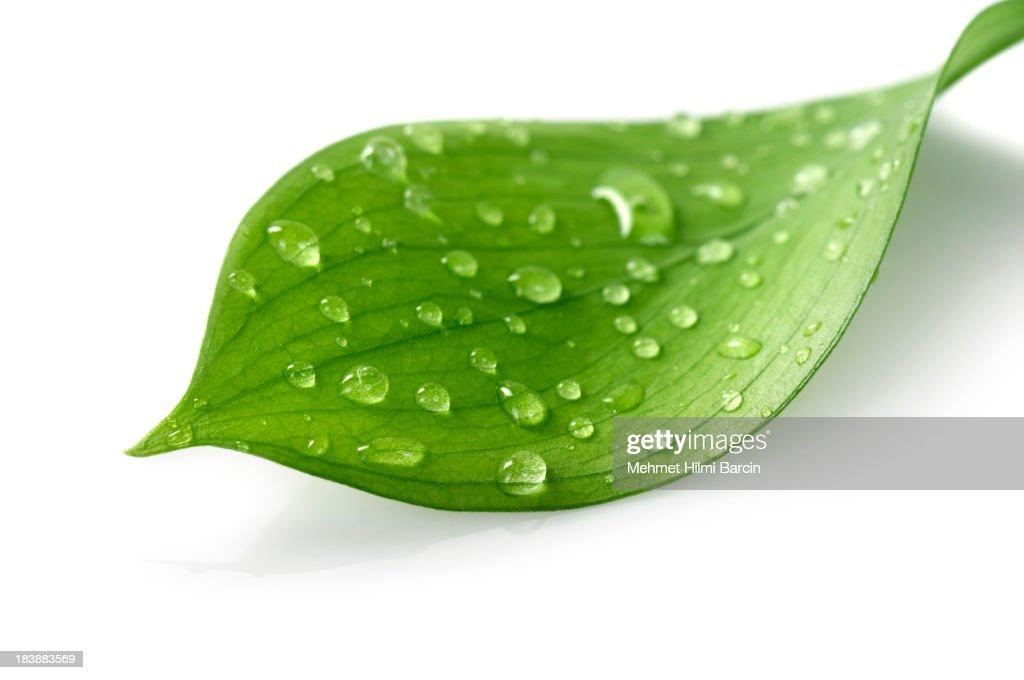 Wasser Tropfen auf Blatt : Stock-Foto