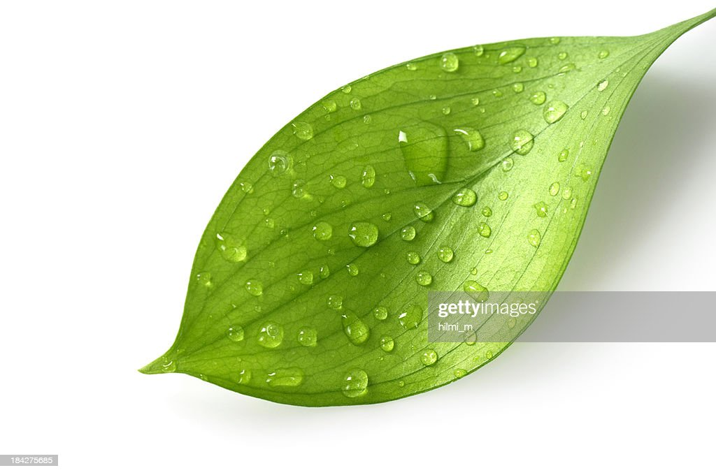 Water Drop On Leaf Stock Photo Getty Images