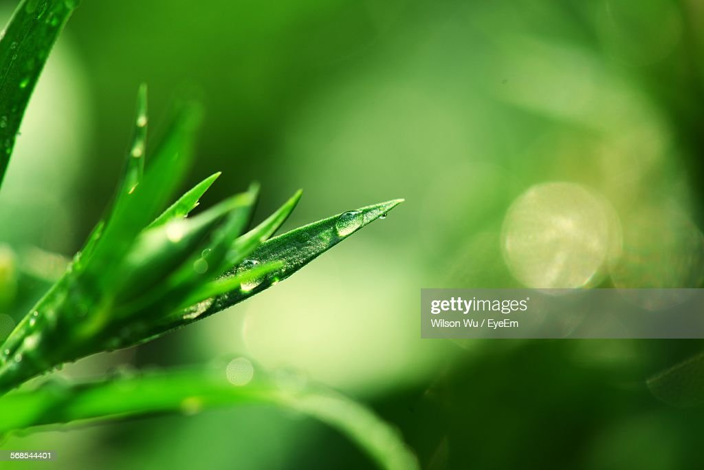 Water Drop On Leaves Outdoors : Stock Photo