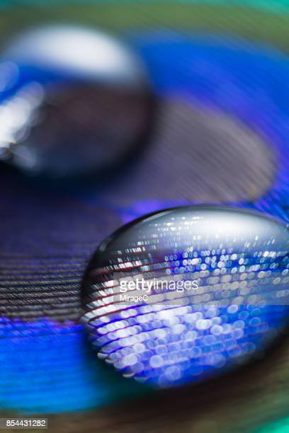 water drop on peacock feather, shallow depth of field - miragec stock pictures, royalty-free photos & images