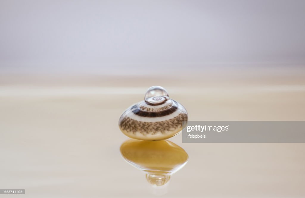 Water Drop On Sea Shell : Stock Photo