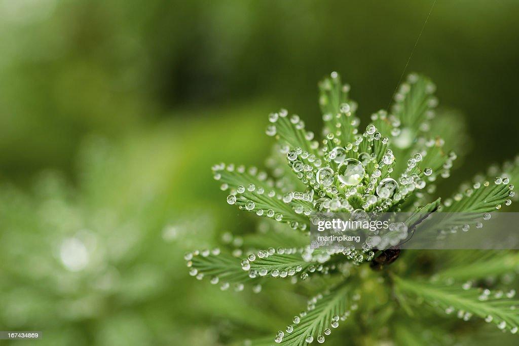 De agua drop : Foto de stock