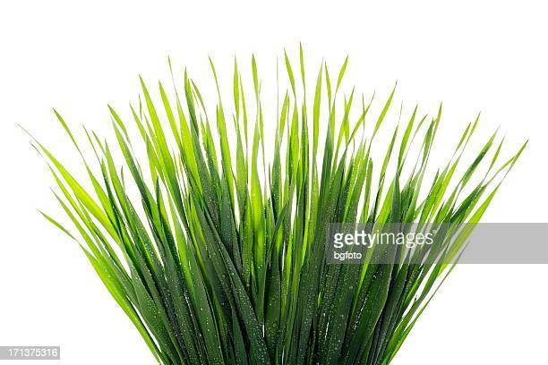 water droplets on grass - blade of grass stock pictures, royalty-free photos & images