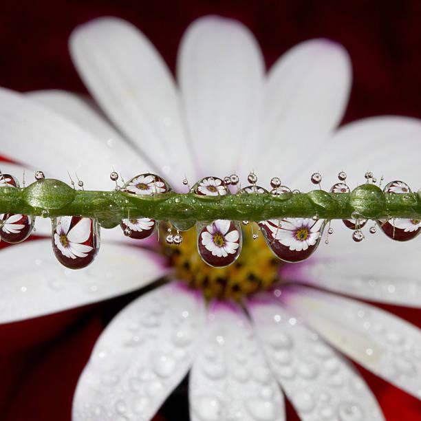 Water Drops And Daisy Wall Art