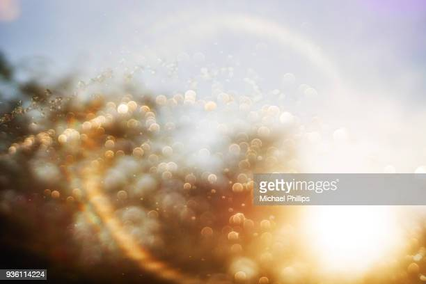 Water drops in golden light
