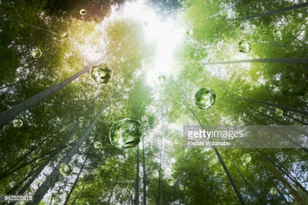 water drops in the bamboo grove - reinheit stock-fotos und bilder