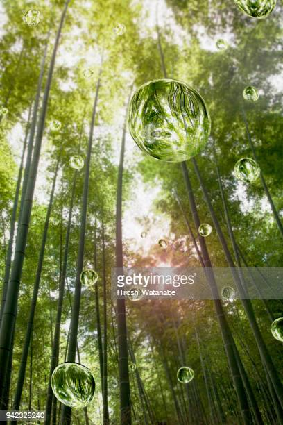 water drops in the bamboo grove - grove_(nature) stock pictures, royalty-free photos & images