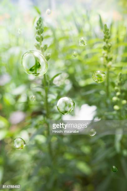 water drops in the spring garden - 生い茂る ストックフォトと画像