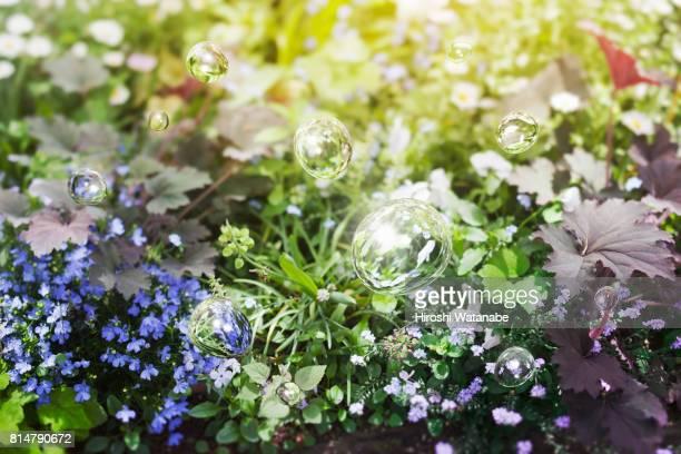 water drops in the spring garden - 露 ストックフォトと画像