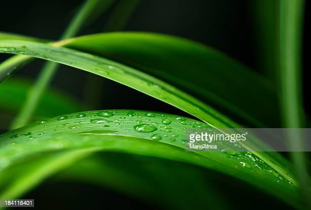 gocce d'acqua lscape - filo d'erba foto e immagini stock