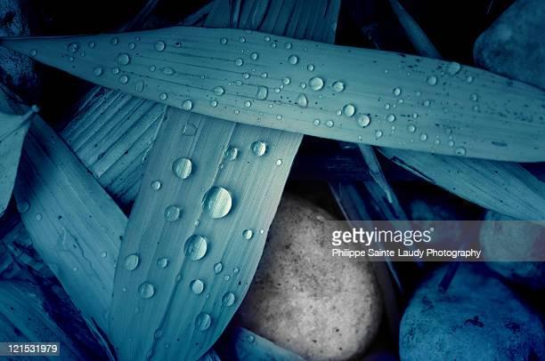 water drops on bamboo leaves - folha de bambu - fotografias e filmes do acervo