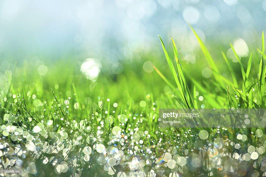 雨滴の緑の芝生-浅い DOF : ストックフォト