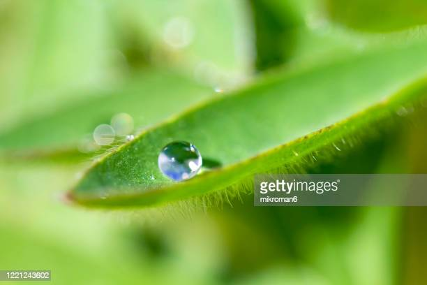 water drops on green leaf - dew stock pictures, royalty-free photos & images