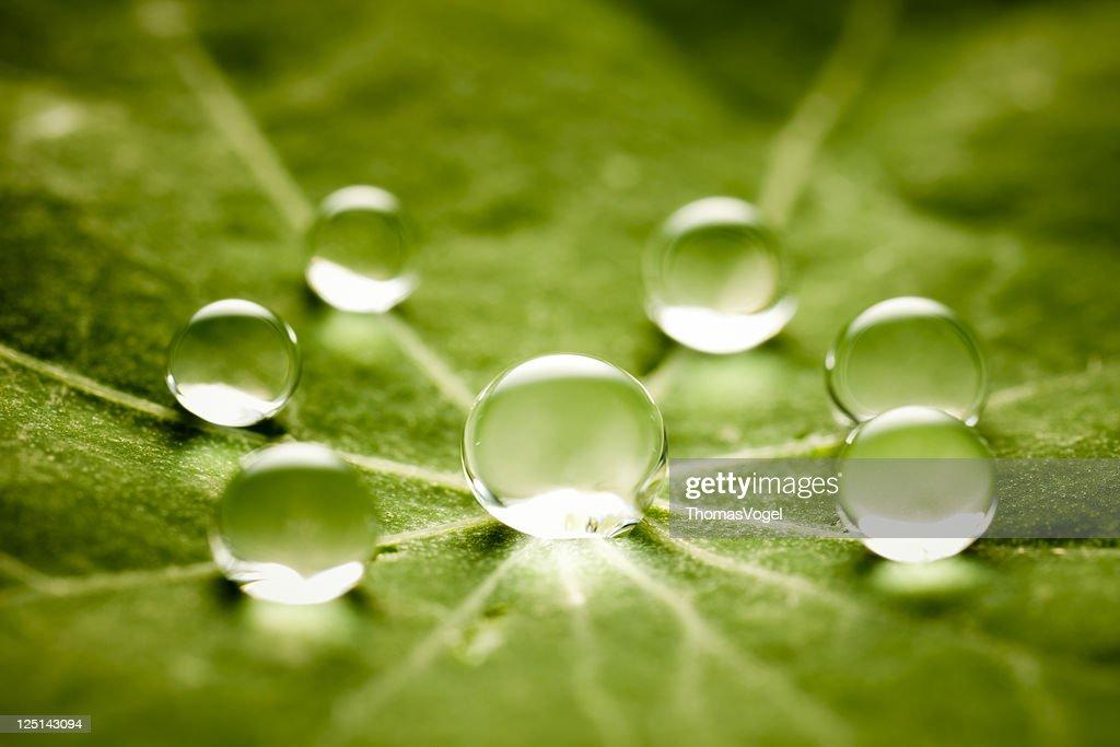 Gotas de água na folha verde : Foto de stock