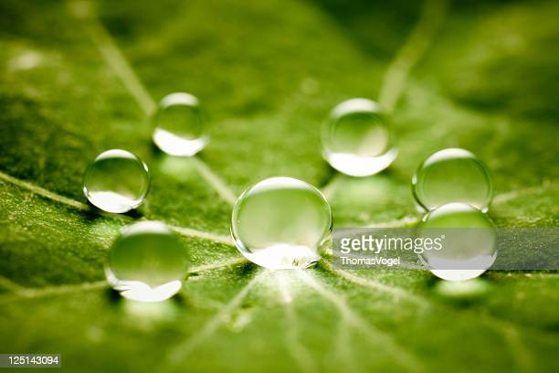 Water drops on green leaf