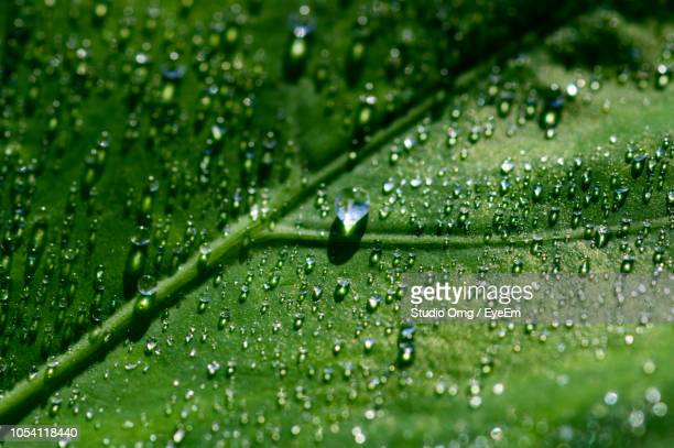 Water Drops On Green Leaves During Rainy Season