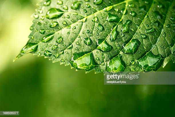Water drops on leaf in sunshine