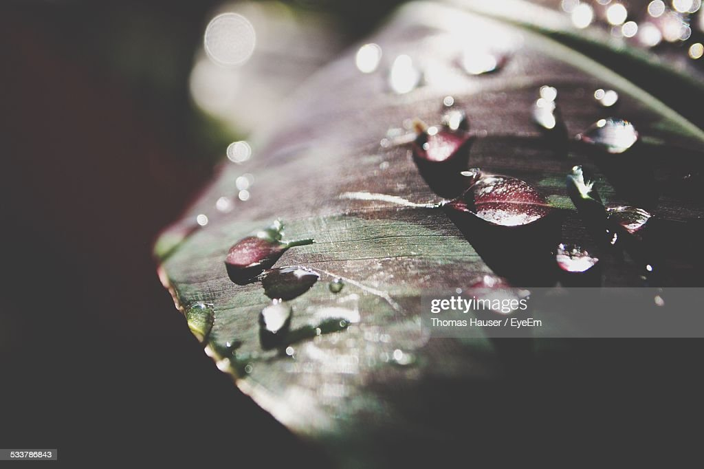 Water Drops On Leaf : Foto stock