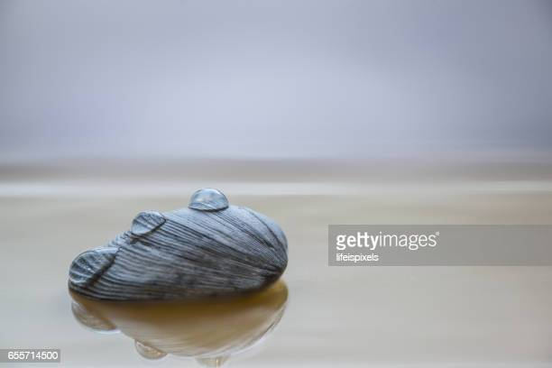 water drops on sea shell - lifeispixels stock pictures, royalty-free photos & images
