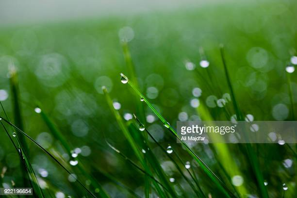 water drops - dew stock photos and pictures