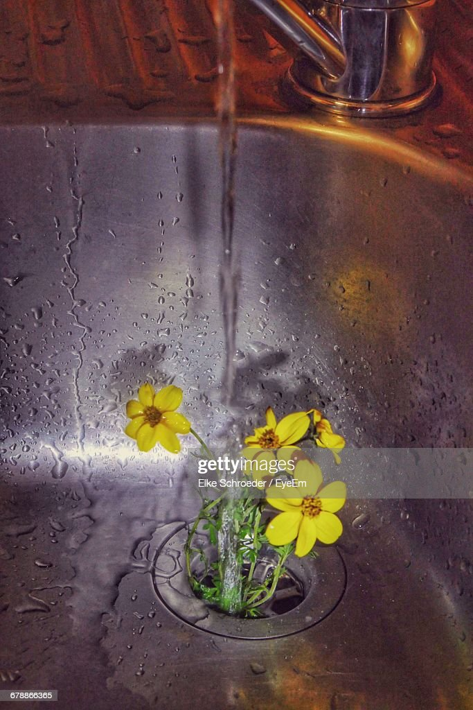 Water Falling From Faucet On Yellow Flowers In Sink Stock Photo ...